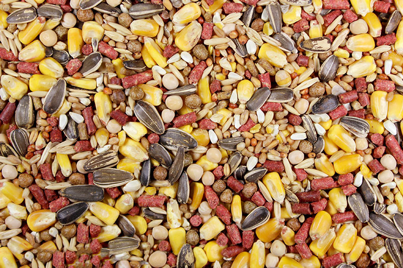 Leach Grain & Milling Feed Chavez Mix