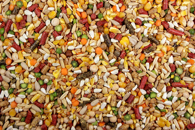 Chicken Feed – Leach Grain & MIlling